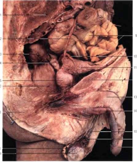 Половые органы в фотографиях красиво кончают